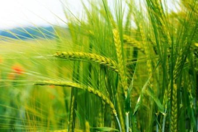 Татарстан получит 17 млн рублей на развитие растениеводства