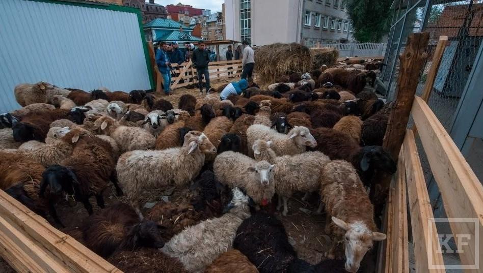 Дагестанские производители хотят поставлять рис ибаранину вТатарстан