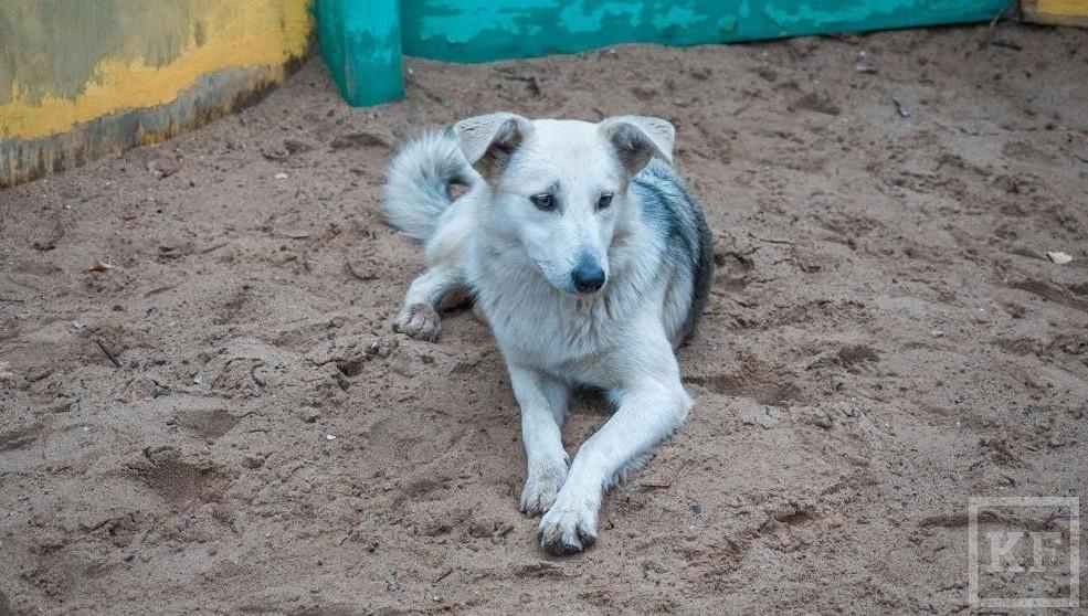 Следователи проверяют сообщения онападении бродячих собак надетей вКазани