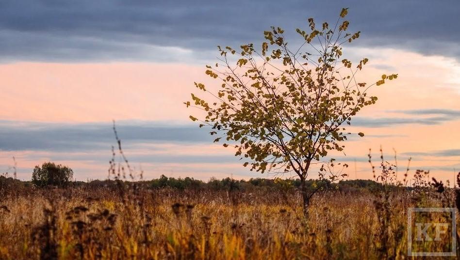 Напроведение весенне-полевых необходимо неменее 20 млрд руб. — Марат Ахметов