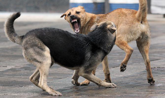 В Бугульме увеличилось количество обращений с укусами бродячих животных