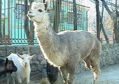 При пожаре в зоопарке погибли почти все животные