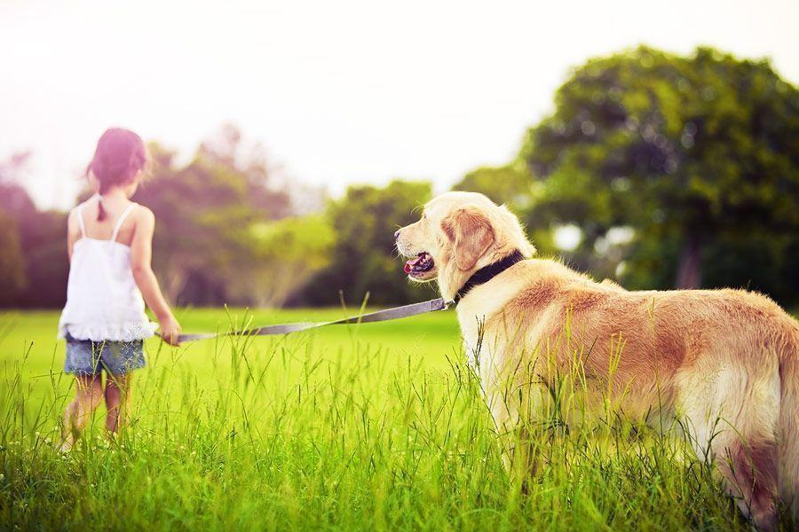 Госсовет  в третьем чтении принял закон о домашних животных