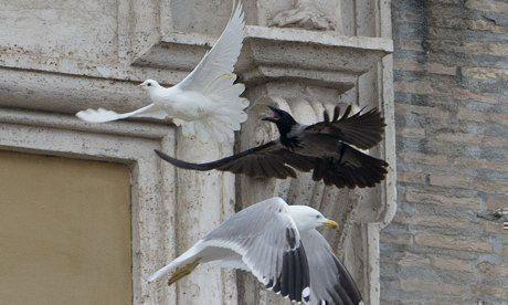 Чайка и ворон напали на голубей мира выпущенных папой Франциском