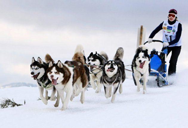 Через Татарстан будут проходить международные гонки на собачьих упряжках