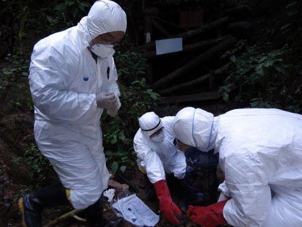 Смертельный для человека вирус обнаружен в Китае