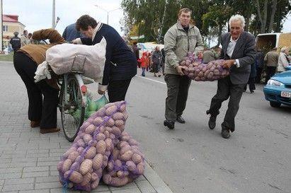 Пожилые казанцы получат более 3 тонн картофеля