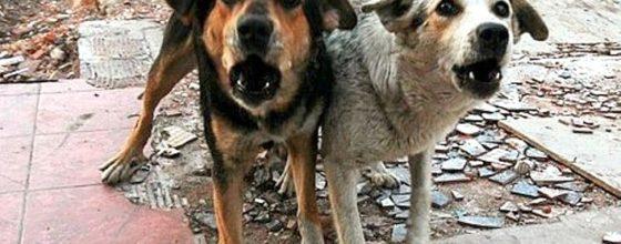 В Зеленодольске напуганы огромным количеством бродячих собак. Для решения проблемы из бюджета выделено всего 91 300 рублей