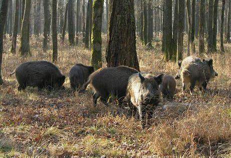 Чистопольских охотников обязали сдавать свою добычу ветеринарам на анализы