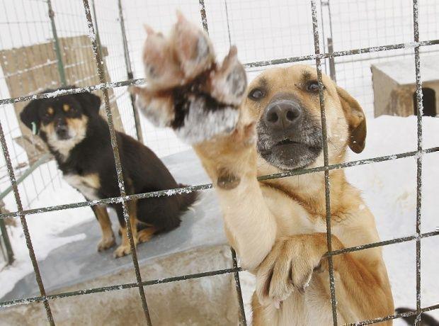 Казанские зоозащитники не смогли отменить отлов 8,6 тысяч собак