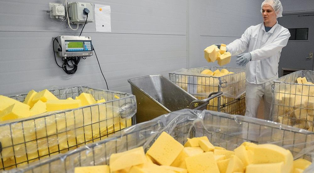 Более 80% сыра в России оказалось фальсификатом