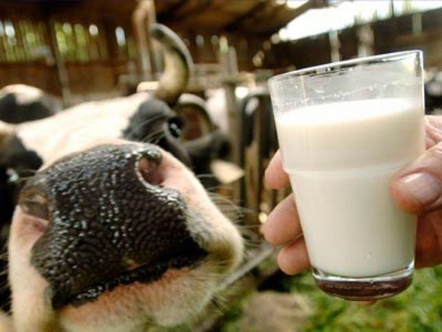 В Чистопольском районе остановлен спад производства молока