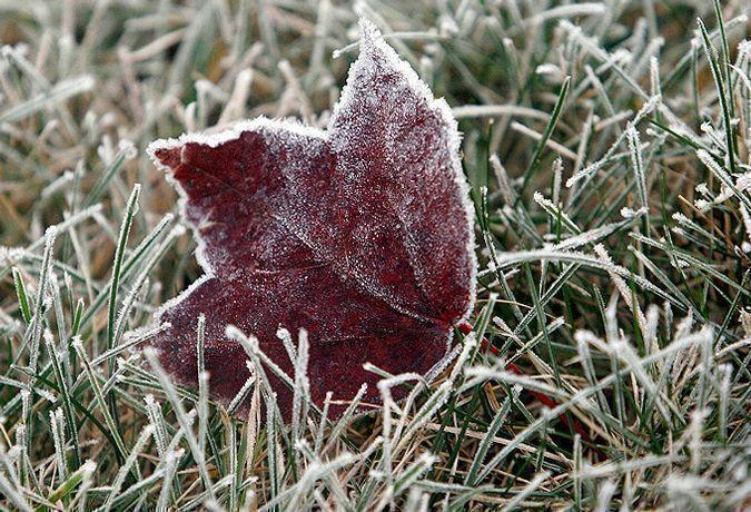 В Татарстане ожидаются заморозки