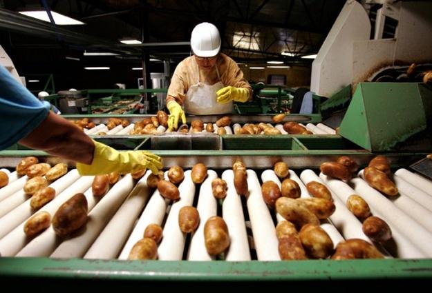 Завод попереработке картофеля построят вТатарстане