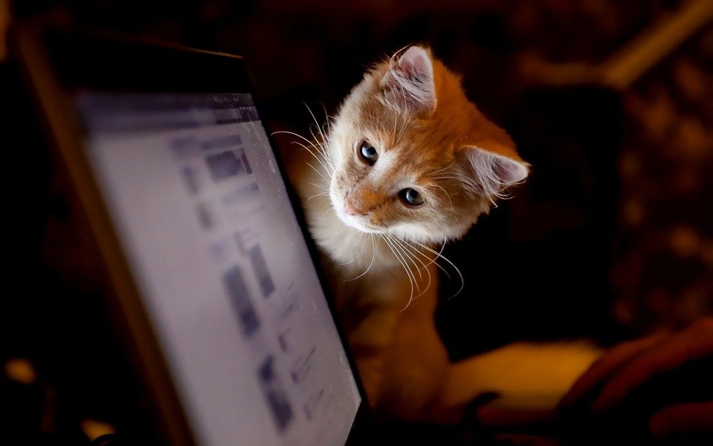 Всоцсети «ВКонтакте» можно будет переводить деньги