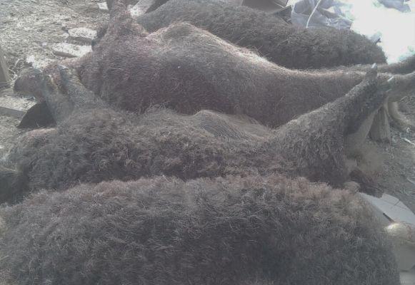 Возбуждено дело пофакту отстрела животных уфермера вТатарстане