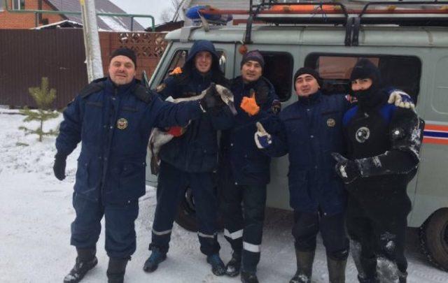 ВКазани cотрудники экстренных служб вызволили изледового плена 3-х диких лебедей