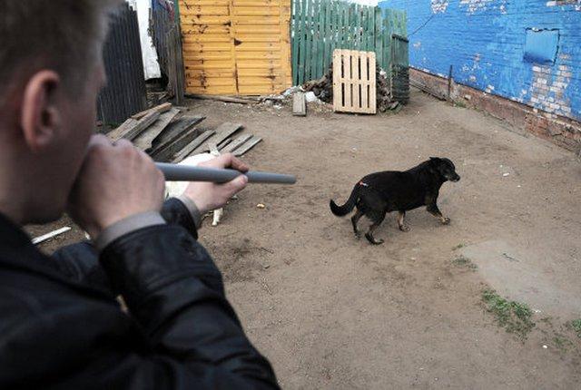 ловят бездомных собак