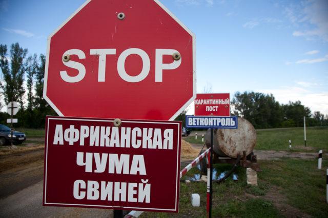 Вспышка АЧС зафиксирована вХарьковской области