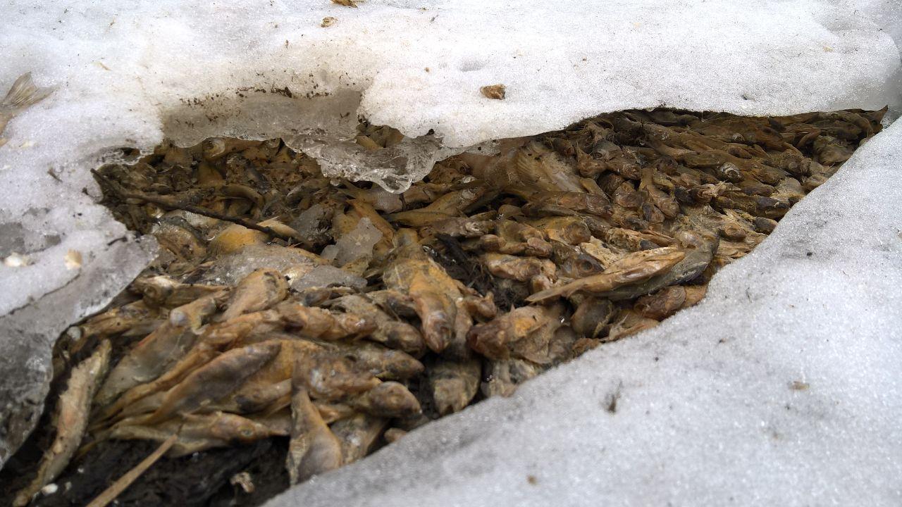 Экологи проверят волжскую воду вЗаймище после обнаружения массового мора рыбы