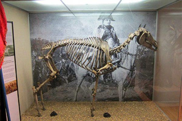 ВСоединенном Королевстве сенсация: 202 года спустя найдена табакерка изкопыта коня Наполеона