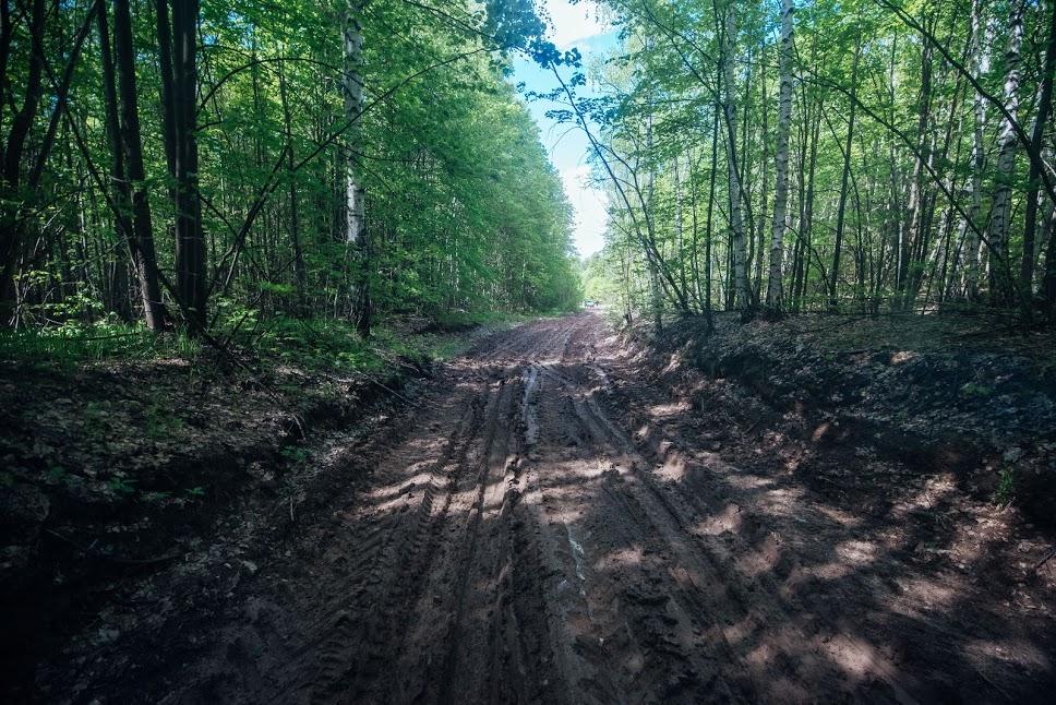 ВСМ «Москва-Казань» будет стоить Татарстану 150 000 вырубленных деревьев