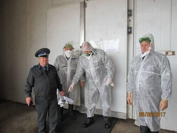 Южноуральцы съели 4 тонны индюшиного фарша сгеномом вируса птичьего гриппа