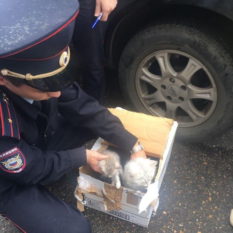 ВКазани граждан дома эвакуировали из-за коробки скотятами